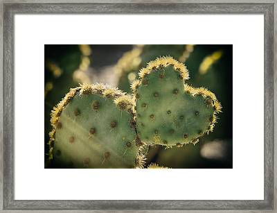 The Heart Of A Cactus  Framed Print by Saija  Lehtonen