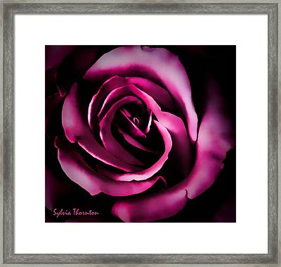 The Heart Of A Rose Framed Print by Sylvia Thornton