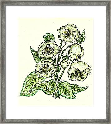 Framed Print featuring the drawing The Helleborous by VLee Watson