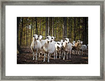 The Herd Framed Print by Swift Family