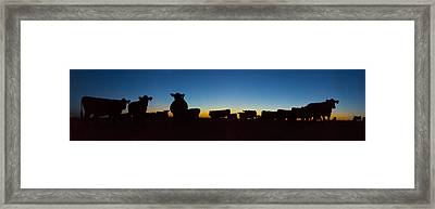 The Herd Framed Print by Thomas Zimmerman