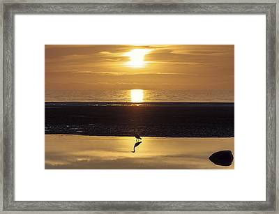 The Heron Framed Print