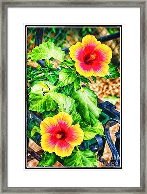 The Hibiscus Of Torcello Framed Print