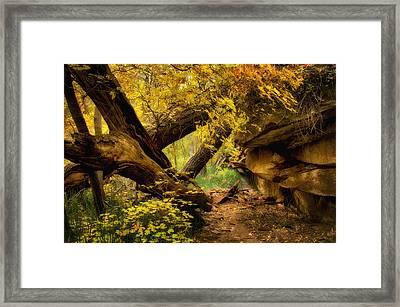 The Hidden Path  Framed Print