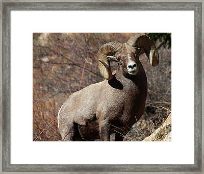 The High And Mighty Framed Print by Jim Garrison