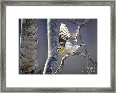 The High Notes Framed Print