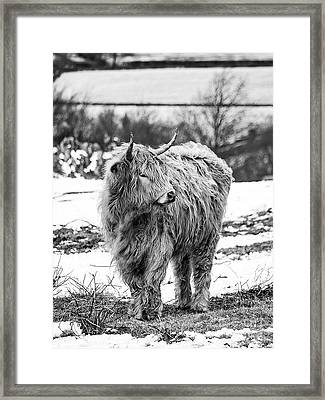 The Highland Cow Black And White Framed Print