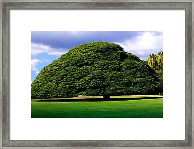 The Hitachi Tree Framed Print by Kelly Vial