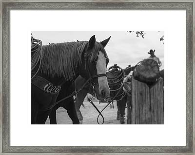 The Hitching Post Framed Print by Amber Kresge