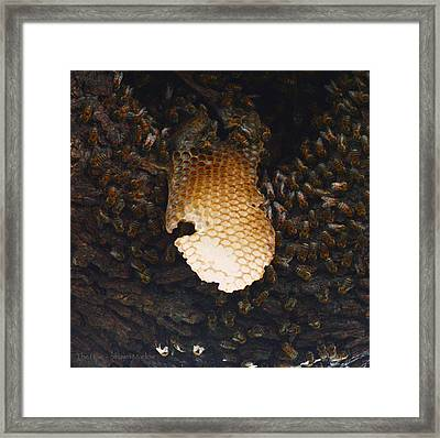 The Hive  Framed Print by Shawn Marlow