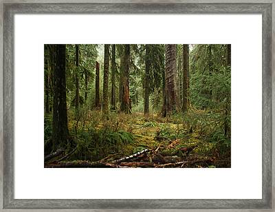 The Hoh Rainforest Framed Print