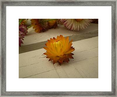 The Holy Flower Framed Print by Fabian Cardon