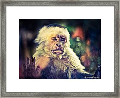 Framed Print featuring the photograph The Hopeless Ape by Stwayne Keubrick