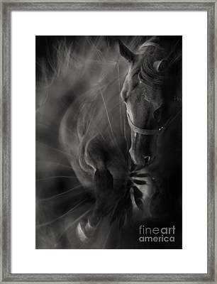 The Horse And Dandelion Framed Print