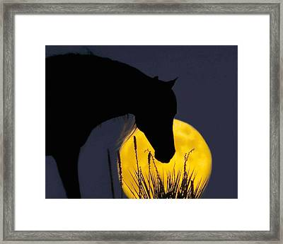 The Horse In The Moon Framed Print