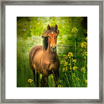 The Horse In The Wildflowers Framed Print