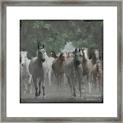 The Horsechestnut Tree Avenue Framed Print by Angel  Tarantella