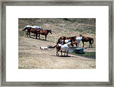 The Horses Of Placerville Framed Print
