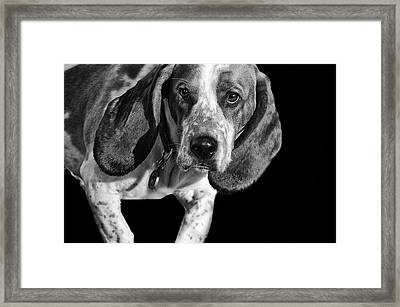 The Hound Framed Print by Camille Lopez