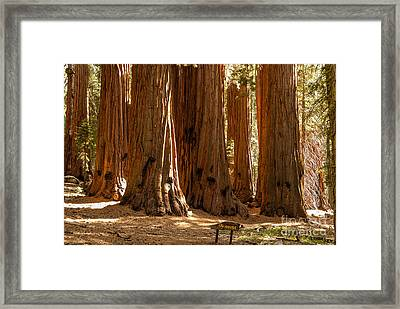 The House  1-7846 Framed Print