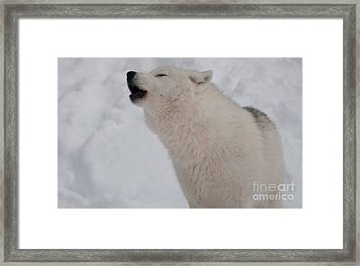 Framed Print featuring the photograph The Howler by Bianca Nadeau