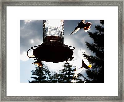 The Hummer's Dance Framed Print by Cherie Haines