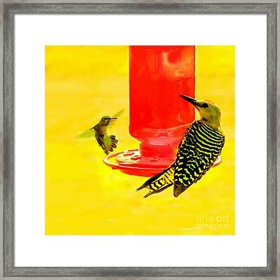 The Humming Bird And Gila Woodpecker Framed Print