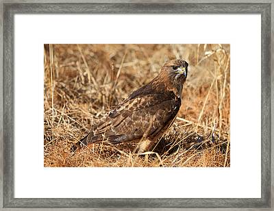 The Hunt 2 Framed Print by Donna Kennedy