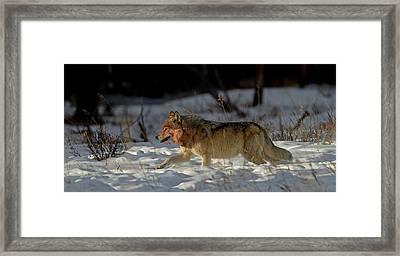 The Hunt Framed Print by Sandy Sisti