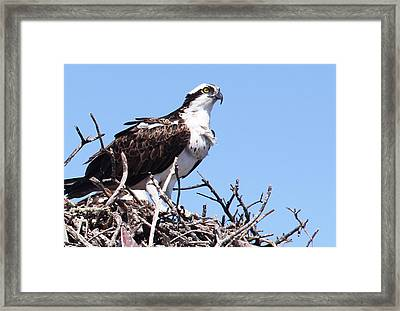 Framed Print featuring the photograph The Hunter by Rosemary Aubut