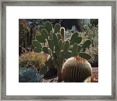 The Huntington Desert Garden Framed Print by Rona Black