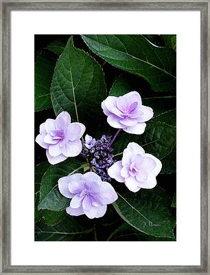 The Hydrangea / Flowers Framed Print