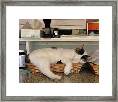 The In Box Is Full - At Good Earth Market - Clarkville Delaware Framed Print
