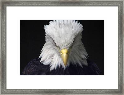 The Incognito Framed Print