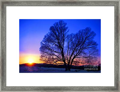 The Incomparable Patience And Fidelity Framed Print