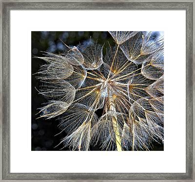 The Inner Weed Paint Framed Print by Steve Harrington