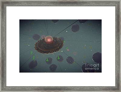 The Interior Of An Eukaryotic Cell Framed Print by Stocktrek Images