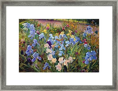 The Iris Bed Framed Print by Timothy Easton