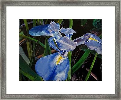 The Iris Framed Print
