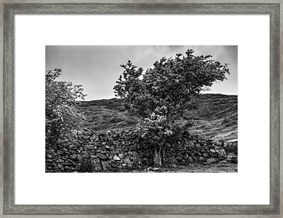 Framed Print featuring the photograph The Irish Wall And The Tree by Juergen Klust