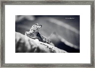Framed Print featuring the photograph The Iron Lizard II by Stwayne Keubrick