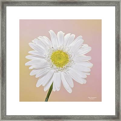 The Itsy Bitsy Spider Framed Print by Peg Runyan