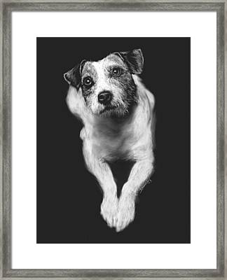 The Jack Russell Stare- Got Ball? Framed Print