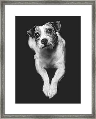The Jack Russell Stare- Got Ball? Framed Print