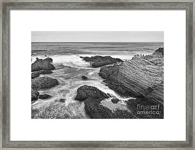 The Jagged Rocks And Cliffs Of Montana De Oro State Park In California In Black And White Framed Print by Jamie Pham