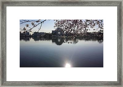 The Jefferson Memorial And The Us Capitol Through The Cherry Blossoms Framed Print