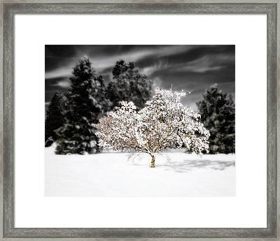 The Jeweled Tree Framed Print by Vicki Jauron