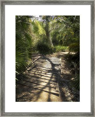 Framed Print featuring the photograph The Journey Along The Path Comes With Light And Shadows by Lucinda Walter