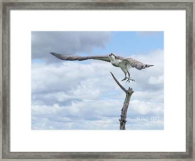 The Journey Begins Framed Print by Heather King
