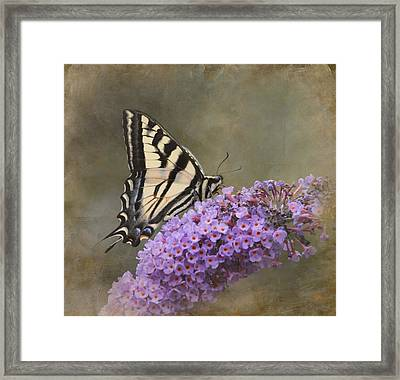 The Joy Of Nectar Framed Print by Angie Vogel